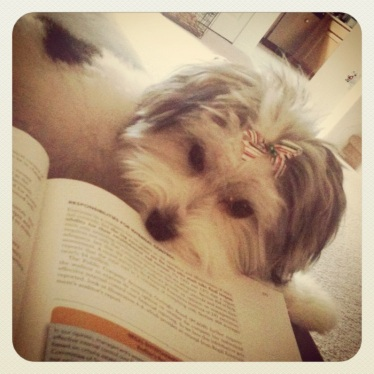 Studying with Winnie